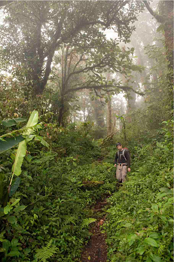 Researchers have learned that cloud forest trees take in water through ...